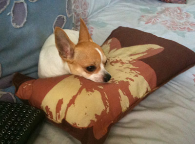 Ben_on_pillow