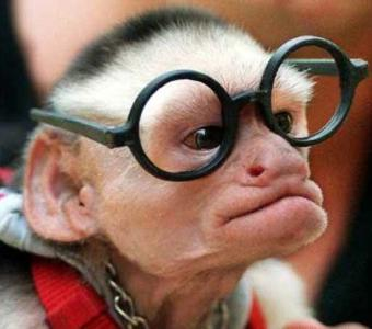 monkey_uncle1