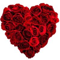 heart roses1